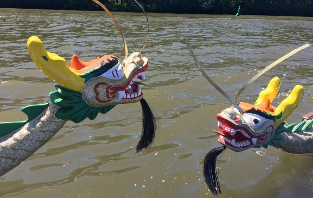 Flexülenbomber und Powerraider auf der Saale- Ergebnisse vom 18. Halleschen Drachenbootrennen 2017